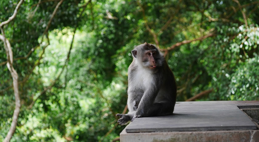 Bali – Monkey Forest