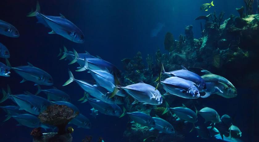Benalmadena – Sea Life Benalmadena