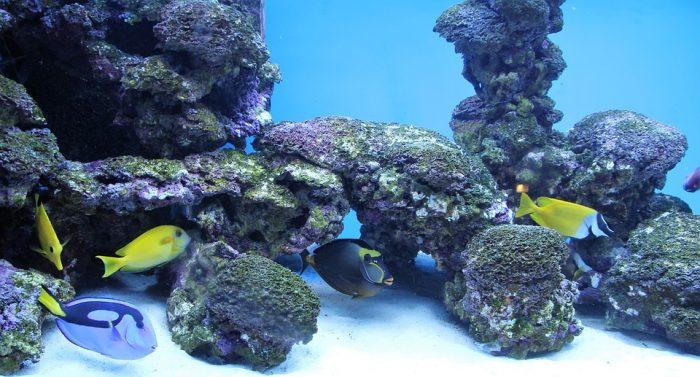 Crete-Aquarium