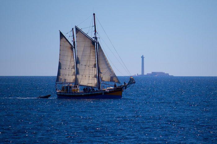 Sailing Boat Tour-Albufeira
